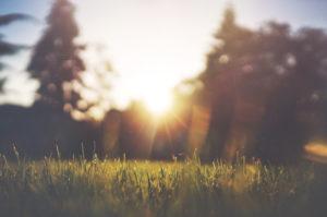 Sunlight shining in field